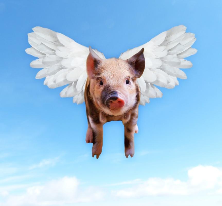 Dia dos Animais: Instituições nacionais e internacionais incentivam brasileiros a virarem anjos da guarda na hora decomer